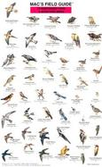 Mac's Field Guide to Northwest Park and Backyard Birds cover